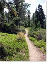 Tahoe Rim Trail - Trailspass im Wald