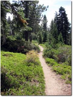 Tahoe Rim Trail - Trailspass im Wald