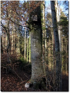 Vogelhauscache No 2