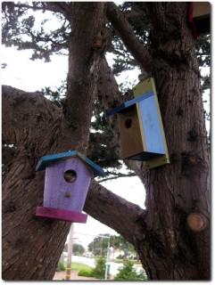 Geocache getarnt als Vogelhaus