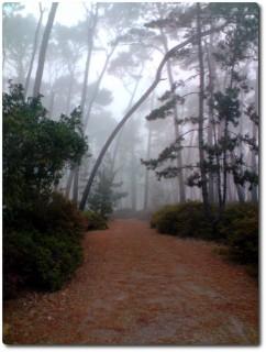 Oberhalb des Presidios im Nebel