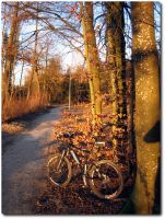 Bike in der Winterabendsonne