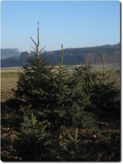 Überlebende des Weihnachtsbaummassakers !