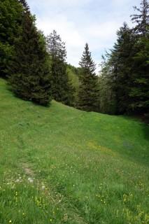 Wiesentrail beim Chellenchöpfli