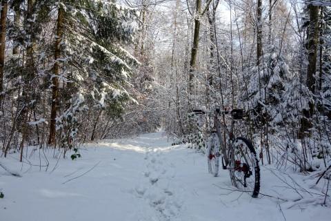Winterbiken im Wald bei Attisholz