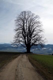 Aussichtsbaum ob Wintersey