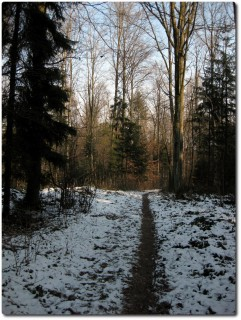 Winterlicher Waldtrail