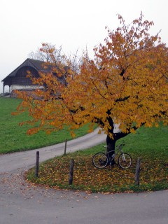 Herbstimpressionen im Aufstieg
