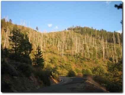 Anfahrt zum Yosemite Valley - Brandspuren