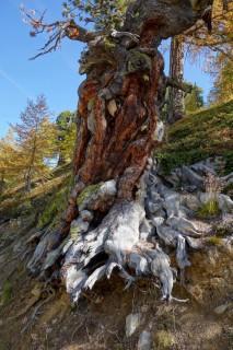 Baumimpressionen 1