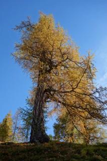 Baumimpressionen 3